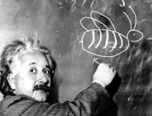 Einstein'ın arı teorisi sorgulanıyor